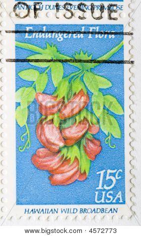 Postage Stamp Hawaiian Wild Broadbean