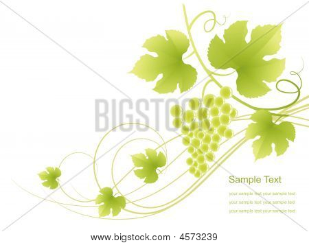Grape Vine Background