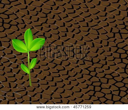 parched soil with leaf emerging