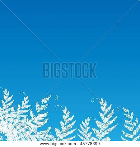Fern On The Blue Background For Text