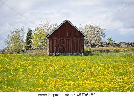 Old Barn I Field With Yellow Flower