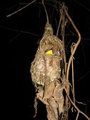 a yellow bird in its nest at nighttime poster