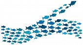 Fishes swim in majority and minority direction poster