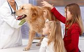 Little sisters and dog at veterinary surgeon, vet examining dog. poster