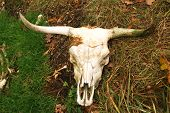 The skull of an Scottish highlander in open nature. poster