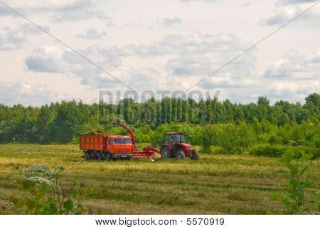 Hay Gathering