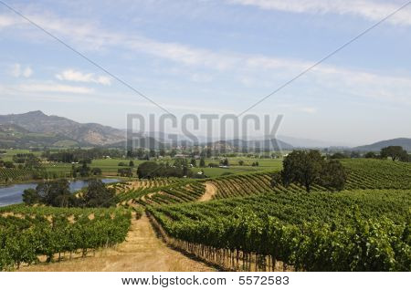 Nappa Valley Winery