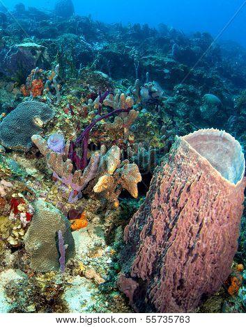 Beautiful Caribbean Reef