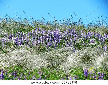 Meadow flowerses