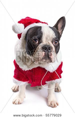 French bulldog in santa costume for Christmas over white poster