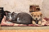 Homeless cat and dog on the rag poster