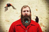 a guy with a nest in his bushy beard poster