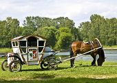 Brown horse with white carriage standing in summer landscape near lake forest around. poster