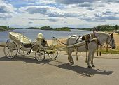White horse with white carriage on bank of river in town Great Novgorod Russia poster