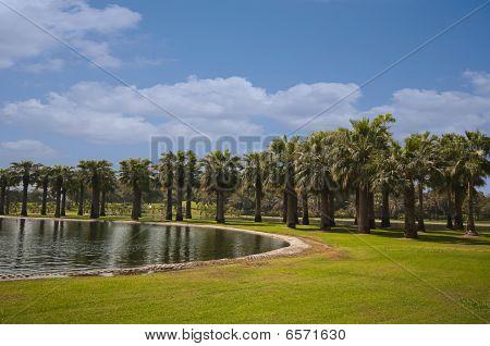 Nature of Palms and Lake
