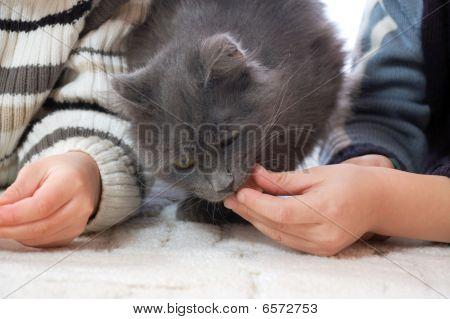 two kids feeding a cat at home poster