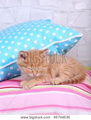 Cute little red kitten  sleeping on colorful pillows, on light wall background poster