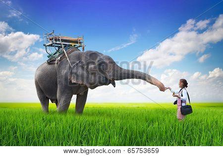Woman Feeding The Elephant Bananas