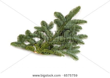 Bare Twig From Christmas Tree Isolated On White Background