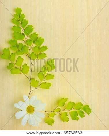 Green Branches Of Fern And Chamomile Flower On Wooden Background