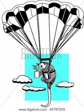 Skydiving  Opossum