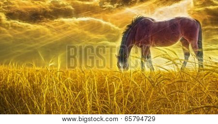 Horse grazing in sun drenched field