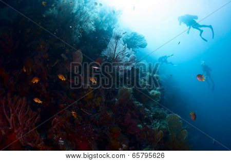 Scuba divers exploring underwater reef wall