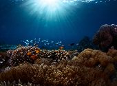 Underwater shot of the vivid coral reef in tropical sea. Bali Barat National Park, Indonesia poster
