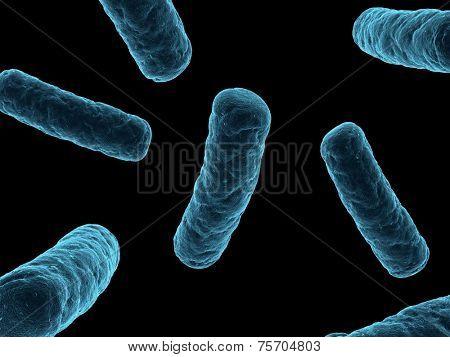bacteria illustration