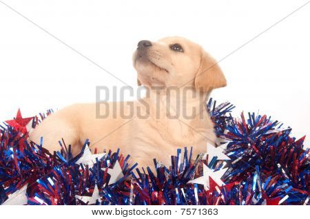 Cute yellow labrador beagle mix puppy with fourth of july decorations on white poster