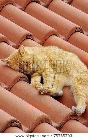Small Kitty Sleep On Roof Tilesmall Kitty Sleep On Roof Tile