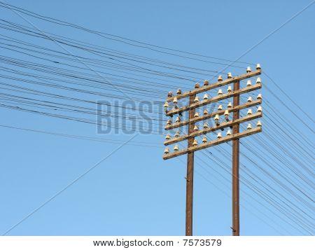 Telegraph Lines
