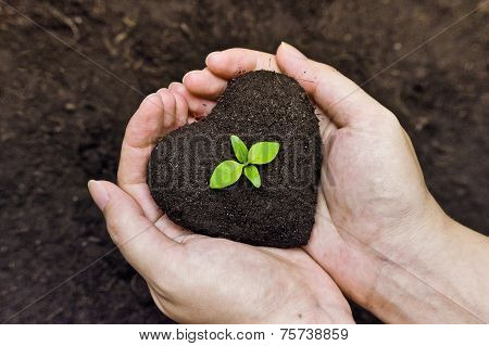 hands holding fertile soil as a heart shape with a young green tree in the middle / planting tree / growing a tree / love nature / heal the world poster