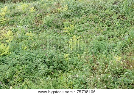 Green foliage background, selective focus on the middle line poster