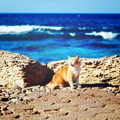 Coastline with ginger tabby roar cat. Travel at sea concept. Instagram retro effect. poster