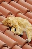 Small Red White Kitty Snoozing on Roof Tile poster
