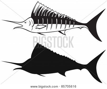 Sailfish saltwater fish