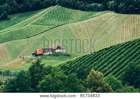 Vineyard in Styria