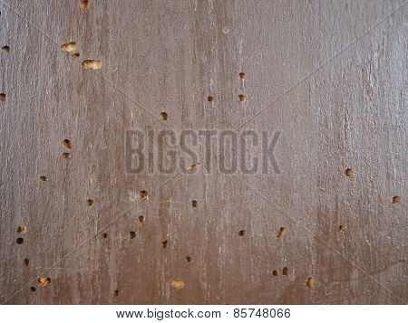 Wood damaged by the common furniture beetle aka common house borer scientific name Anobium punctatum woodboring beetle poster