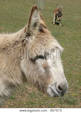 donkey face poster