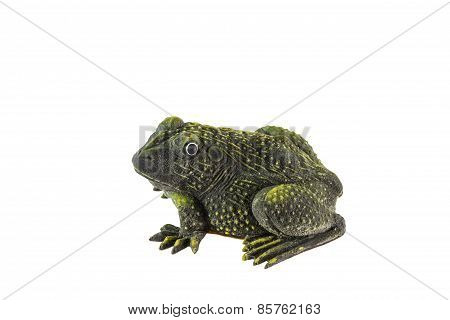 Plastic frog toy on white background