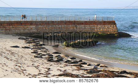 Seals at the Children s Pool Beach in La Jolla, California