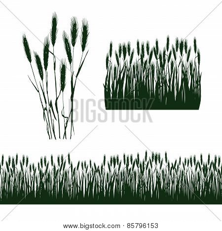silhouettes of spikelets