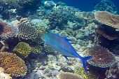 Fishes in corals. Maldives .Underwater landscape in a sunny day poster