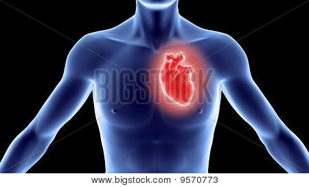 Human Body With Heart