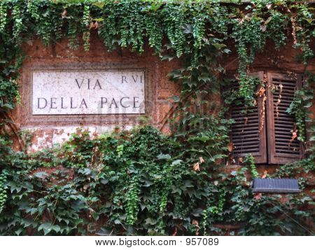 Ivy Or Vine Covered Wall In Rome