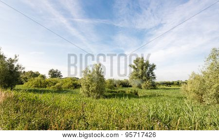 Picturesque Natural Landscape In The Netherlands