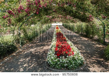 Rose Arbor At Point Defiance