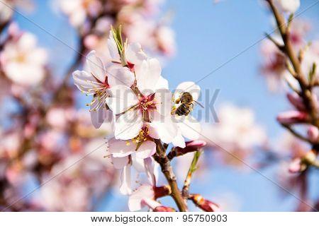 Spring in it's splendour
