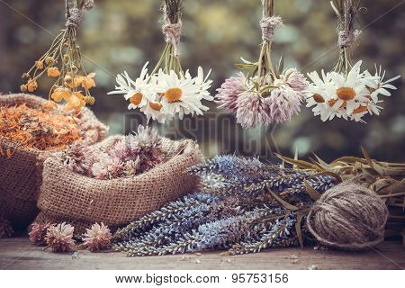 Healing Herbs Bunches And Hessian Bags With Dried Marigold, Clover And Chamomile. Herbal Medicine.